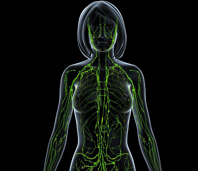 Лимфна система жена