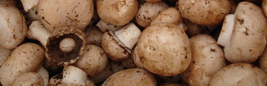 Печурки за по-бързи резултати от диетата