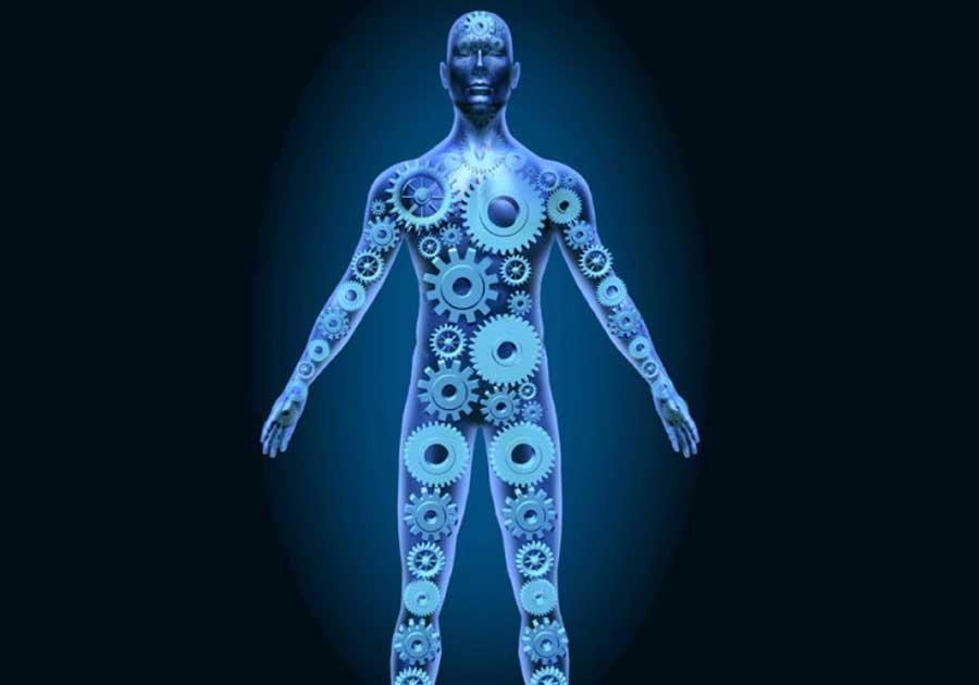 Стареенето, метаболизмът и ограничаването на калории.
